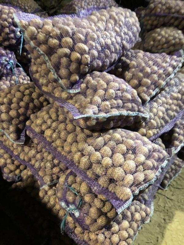 Картофель семенной,  сорт Гала 3
